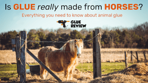Is Glue made from Horses?